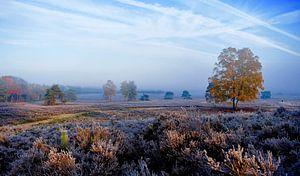 Kleurrijke morgen van Vincent van Wijk