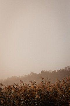 Schilf und Bäume an einem nebligen Herbstmorgen von Oog in Oog Fotografie