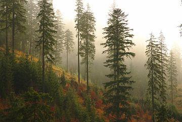 Herfst in de vallei van Elisa Sánchez Correa