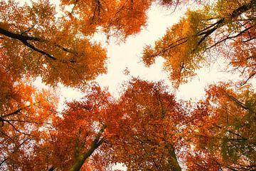 Herfstkleuren van Jessica Berendsen