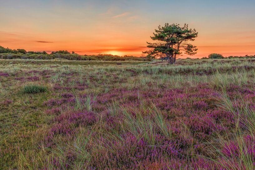 De Helderse duinen van eric van der eijk