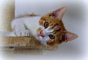 Jong katje.