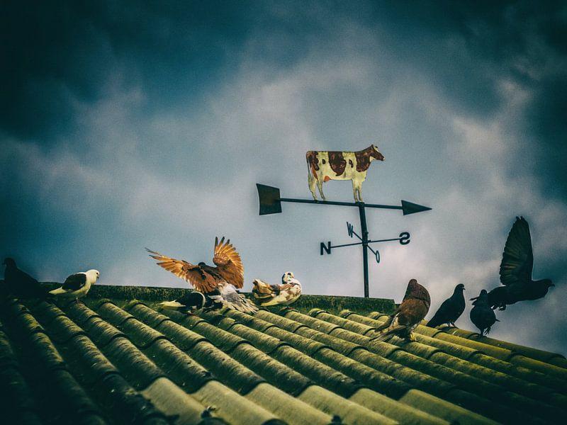 When doves fly van Lex Schulte