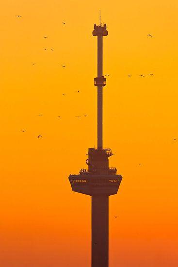 Euromast tijdens zonsondergang (met vogels) te Rotterdam