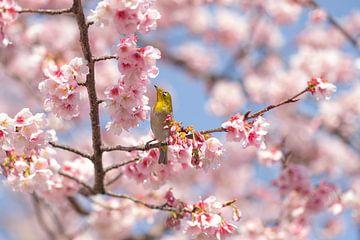Frühling in Japan - Sakura von Angelique van Esch