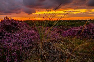 Bloeiende Heide 10 van Peter Heins