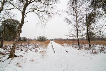 """Landschap nationaal park """"Groote Peel"""" in de winter met sneeuw van Ger Beekes"""