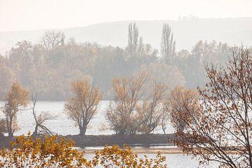 Mildes Herbstlicht am Rhein bei Oestrich-Winkel, Rheingau van Christian Müringer