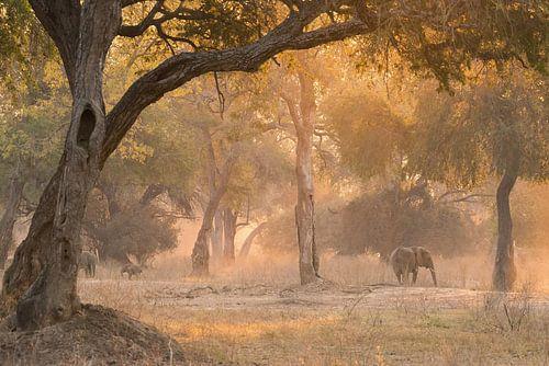 Magisch bos. van Francis Dost