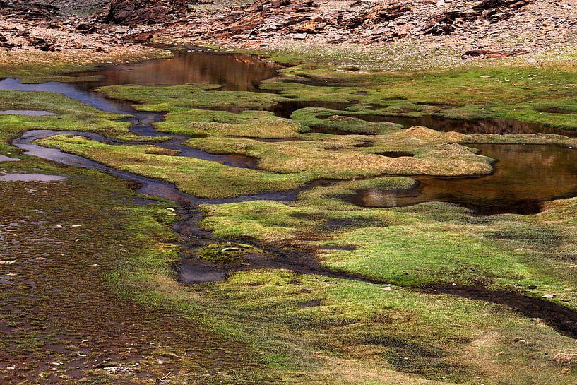 The river grass van Cornelis (Cees) Cornelissen