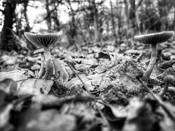 Paddenstoelen tussen de bladeren van Jasper Bloemsma