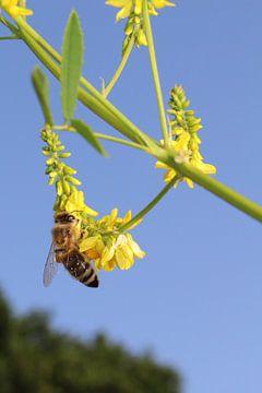 Zonnige wesp tegen blauwe lucht von Assia Hiemstra