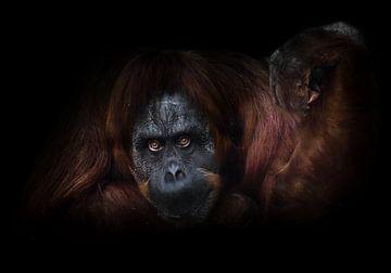 Un orang-outan flegmatique, la main levée sur un fond sombre, propose en quelque sorte de faire un b sur Michael Semenov