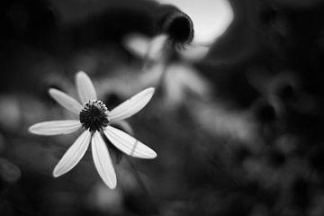 Abstracte planten en bladeren van Rene  den Engelsman