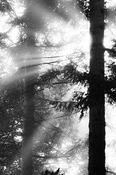 Sunshine van Maja Ooms