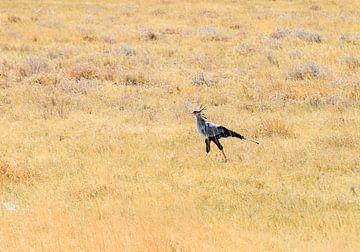 Secretarisvogel van Merijn Loch