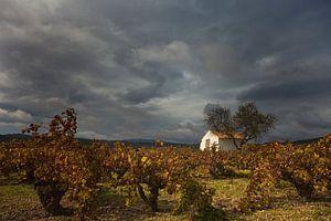 Wijngaard en huisje, Costa Blanca, Spanje