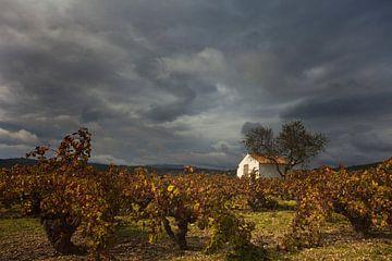 Weinberg und Hütte, Costa Blanca, Spanien von Peter Bolman