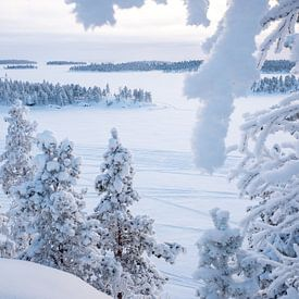 Winter in Lapland van Rene Wolf