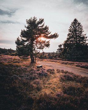 Heidefeld im Wald von Arnold Maisner