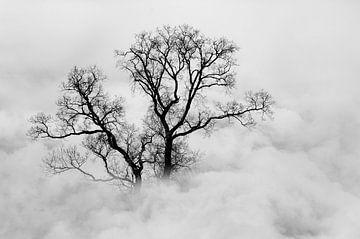 In de wolken II van Corinne Welp