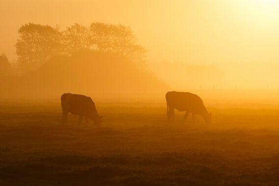 twee koeien in de mist