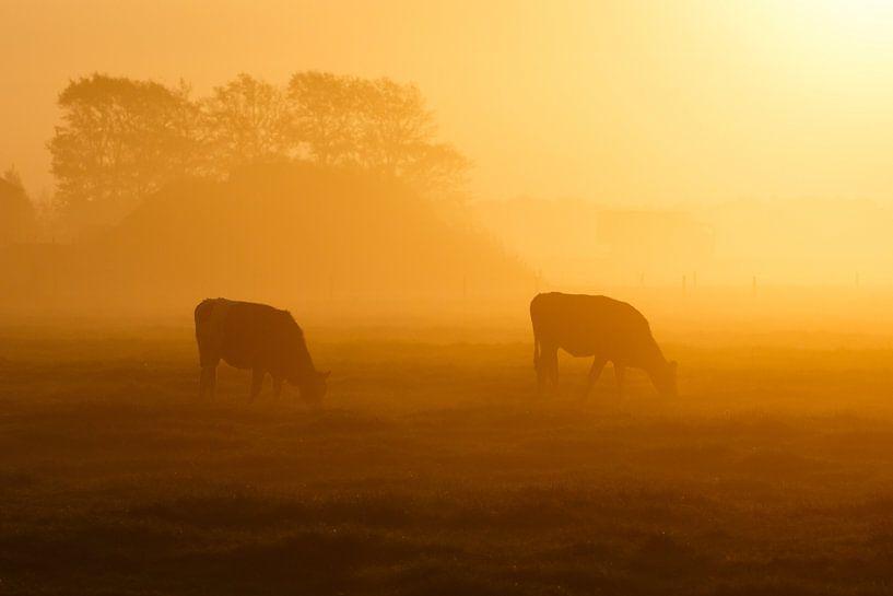 twee koeien in de mist van Pim Leijen