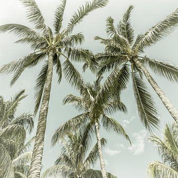 Palmenidylle | Vintage von Melanie Viola