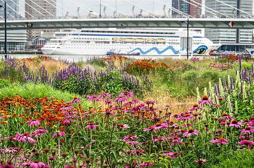 Rotterdam: park, brug en boot