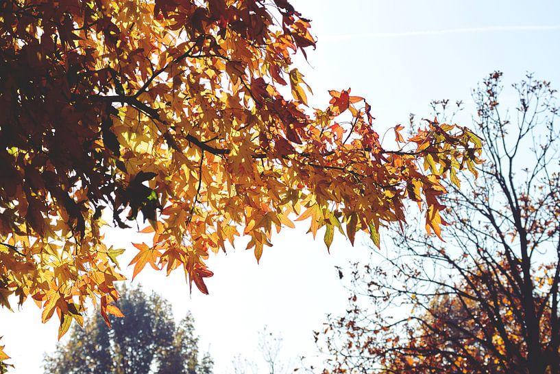 Herfst Lucht van Wijnand Kroes