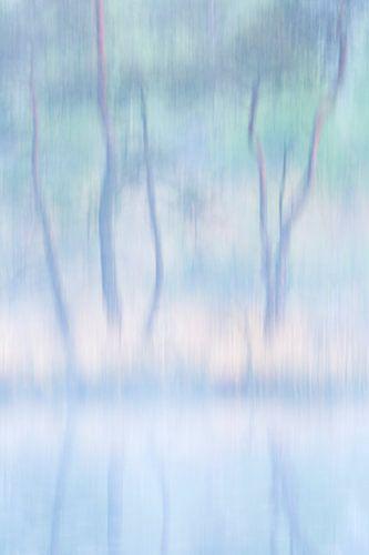 Abstracte bomen van