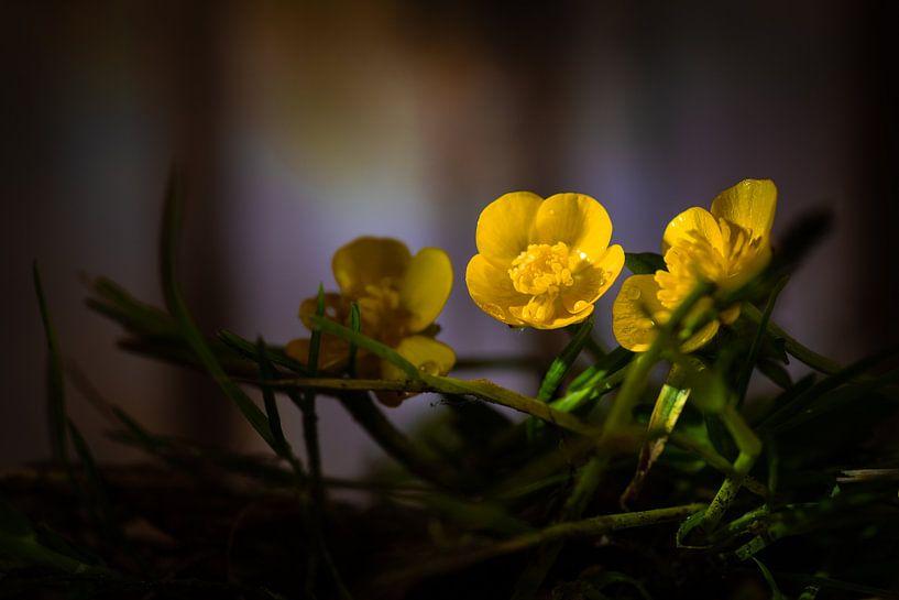 Boterbloemen in het bos van René van der Horst