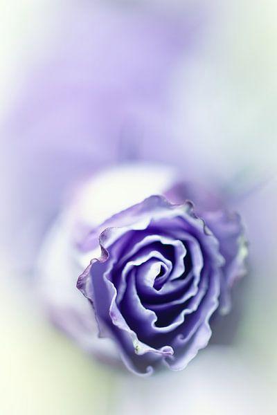 Purple breeze....(soft 2) (bloem) van Bob Daalder