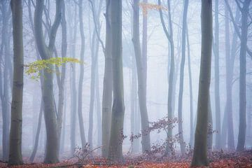 Mist in een sprookjesbos van Francis Dost