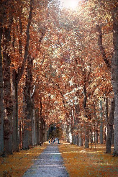 Une forêt aux couleurs de l'automne sur Miranda van Hulst