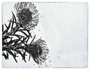 Flower Power #3 von Cristel Brouwer