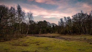 Landschap Tenellaplas Oostvoorne