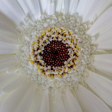Fleur symétrique. sur Rijk van de Kaa