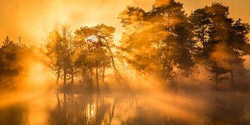 Sunrise Leersumse Veld, Utrechtse Heuvelrug, die Niederlande von Sjaak den Breeje