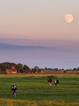 Koeien in de wei met de maan van Emre Kanik
