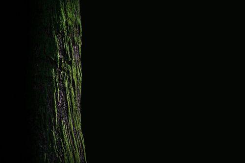 Reuzenwoud