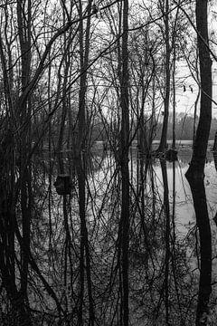 Verdronken land van Foto Amsterdam / Peter Bartelings