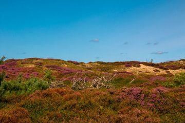 Landscape with heather near Nebel van Alexander Wolff