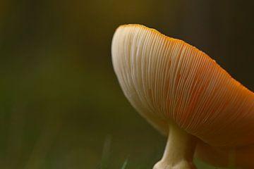 Vliegenzwam in close-up van Stefan Wiebing Photography