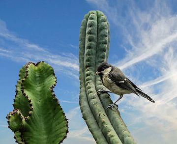 Meise und Kaktus von Georg Tausche