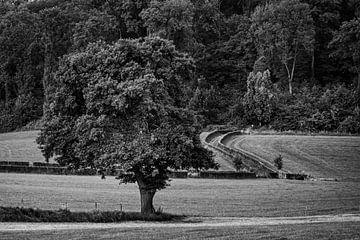 Baum von Rob Boon