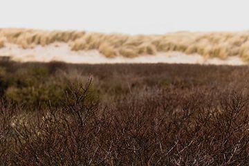 Duinen in het Westduinpark in Scheveningen van Anne Zwagers