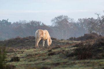 wild paard op de Veluwe van Tania Perneel