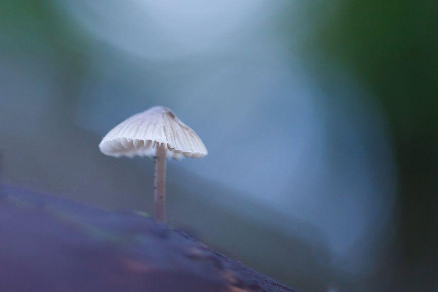 paddenstoel van Pim Leijen