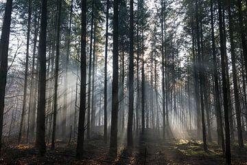 Herfst in het bos van Ger Beekes